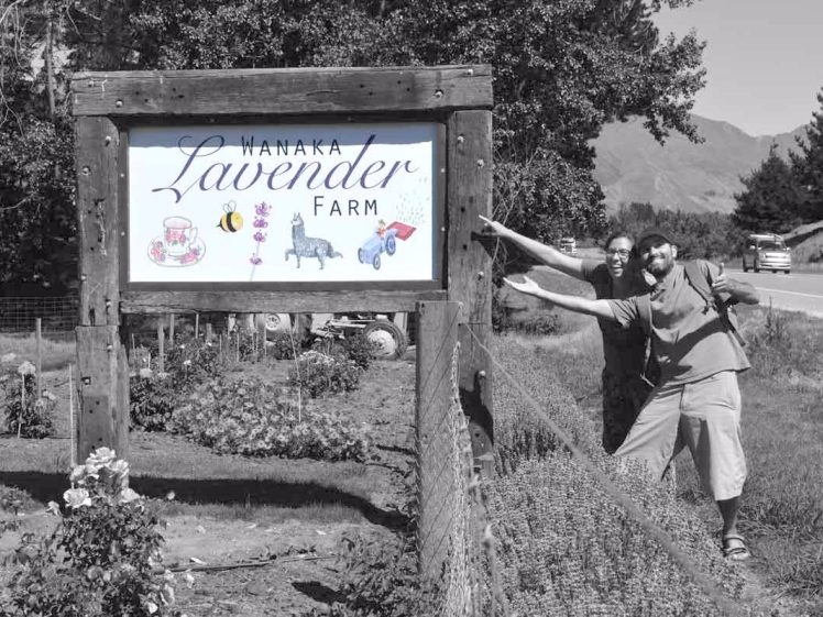 lavander-farm-sign-grisWEB