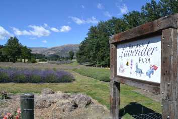 lavender-farm-sign1-WEB